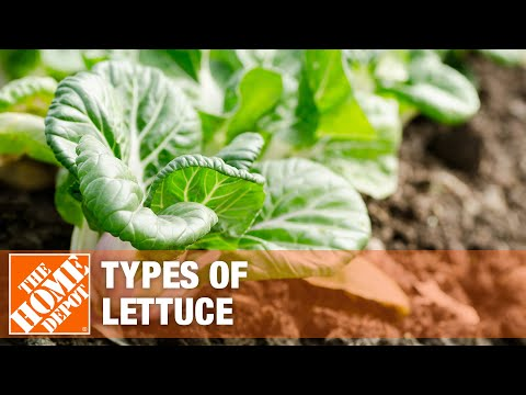 Find out the best types of lettuce for your next meal.