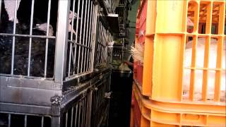 NY Farm Animal Save - Vigil #14 at La Granja Live Poultry