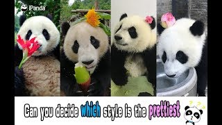 Can you decide which panda style is the prettiest? | iPanda
