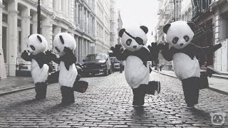 PANDA INTRO Free2Use