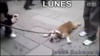 LOS DIAS DE LA SEMANA SEGUN UN PERRO