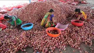Granjeros intentan salvar cosecha de cebolla en la India