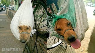 Cuando sepas a donde estaban llevando a estos 2 perros, tus lágrimas empezarán a caer.