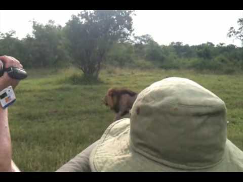 Safari YouTube 2010-02.m4v