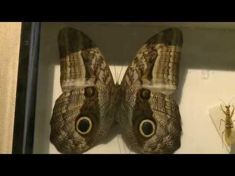 寰宇新聞 完全.不完全.無變態 昆蟲成長大不同 - YouTube