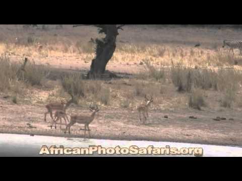 Afrika Safaris