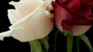 un millon de rosas la mafia