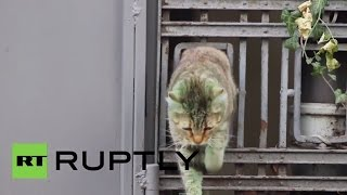Bulgaria: Mystery GREEN CAT is alive! BUT far less green!