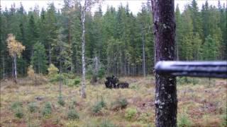 Sauer 404 Synchro XT Moose Hunt 8x68S