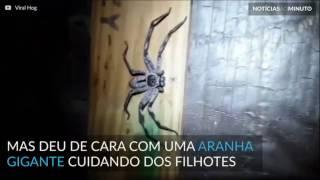 Homem encontra ninho assustador em casa na Austrália