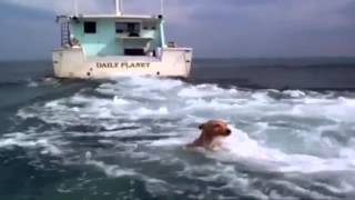 Dolphin and dog......True friendship!