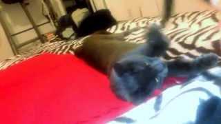 Crazy cat   Curious cat playing