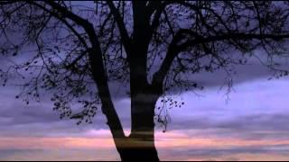 Piotr Ilyich Tchaikovsky - K and K Impressions feat. Tchaikovsky