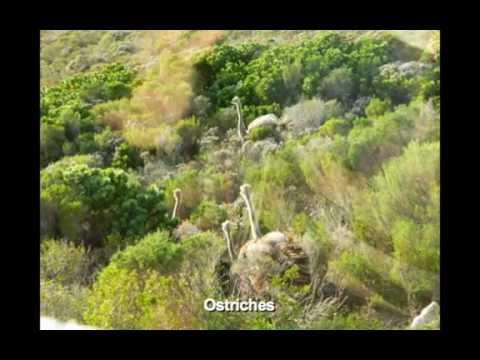South Africa 2011 Medium