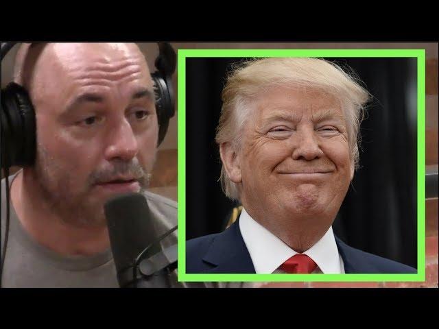 Download thumbnail for Joe Rogan - Donald Trump is Gonna Win
