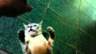 Gato do mau