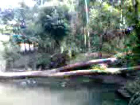 Bangladesh village pond