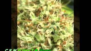 funny cannabis rap 2