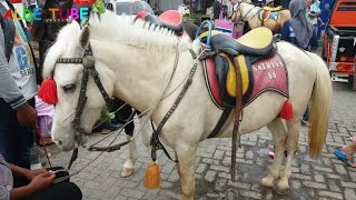 Deba Naik Kuda - Lagu Anak Populer Naik Delman - Naik Delman Istimewa width=