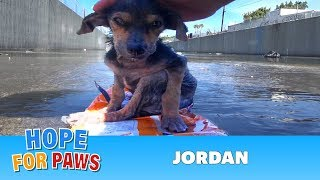 A brave little dog gets rescued from the river. His recovery with Hope For Paws will inspire you. width=