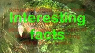 Cameron's Kakapo photostory