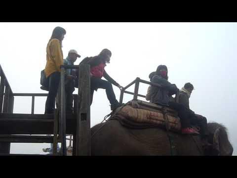 Chitwan-上象