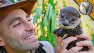 Cutest Baby Otter EVER!! width=