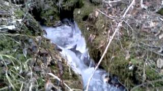water flowing in Montana stream