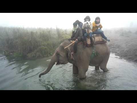 Chitwan-象隻過河01