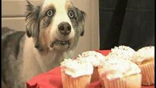 Cupcake dog, czech style