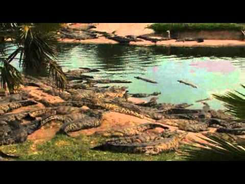 Croc Farm – South Africa Travel Channel 24