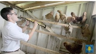Teen Saxophonist performs Ku Ku with Chickens! | From the Top