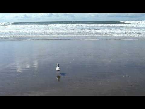 California tsunami waves 2011 from Japan