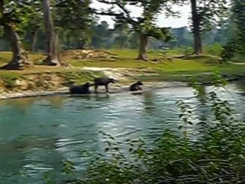 Bardia Safari Park 1