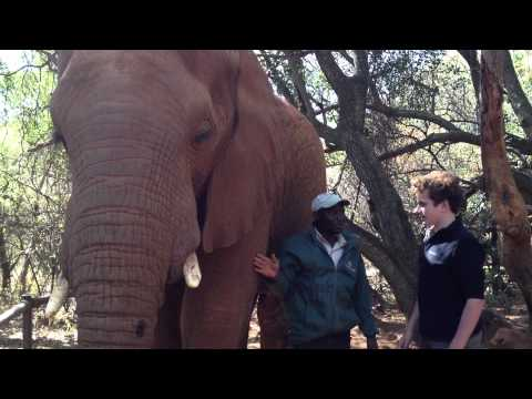 The Elephant Sanctuary – Lucas touching an Elephant