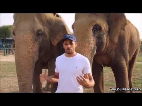 Bollywood Actor Sidharth Malhotra visits the rescued elephants!