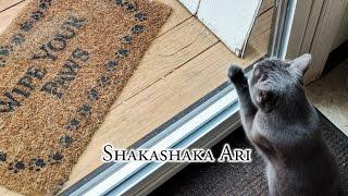 Shakashaka Ari