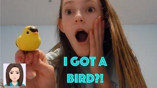 Vlog 429: I Got A Bird?!