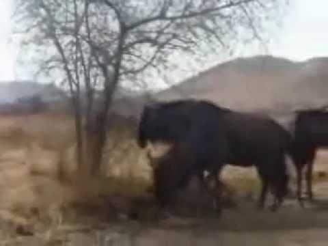 JayfromSA – Video Four [Pilanesberg]