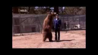 911 call Bear kills a man Warning graphic content