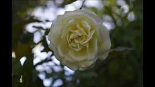 Un Amor de primavera (cancion)