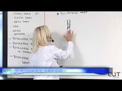 Elit Eğitim Biyoloji Dersi - Bitkilerin Yapısı Bitkisel Dokular Demosudur