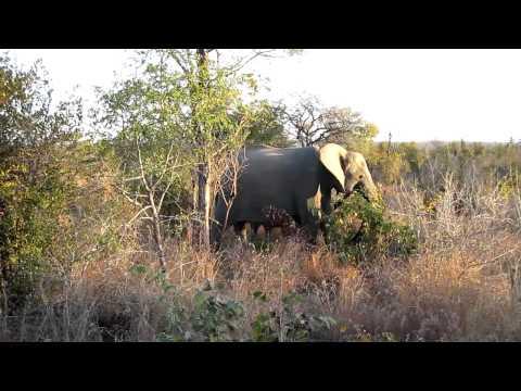 Singita Ebony Game Drive – Elephants 2