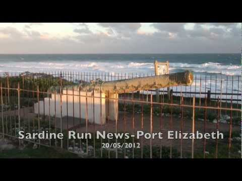 Sardine Run South Africa Update  20 May 2012