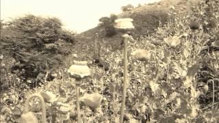 el solitario del sur - el jefazo