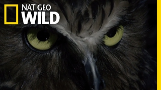 Hoot and Hunt | Destination WILD