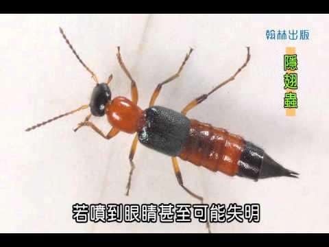 國小_自然_觀察昆蟲【翰林出版_四下_第二單元 昆蟲王國】 - YouTube