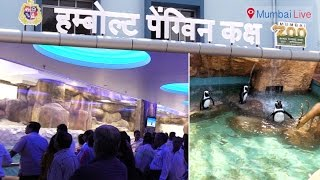 Mumbai needs to wait some more for Penguins | Around You | Mumbai Live