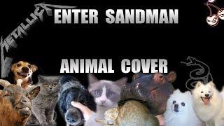 Metallica - Enter Sandman (Animal Cover)