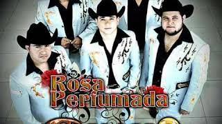 Colmillo Norteño - Rosa Perfumada